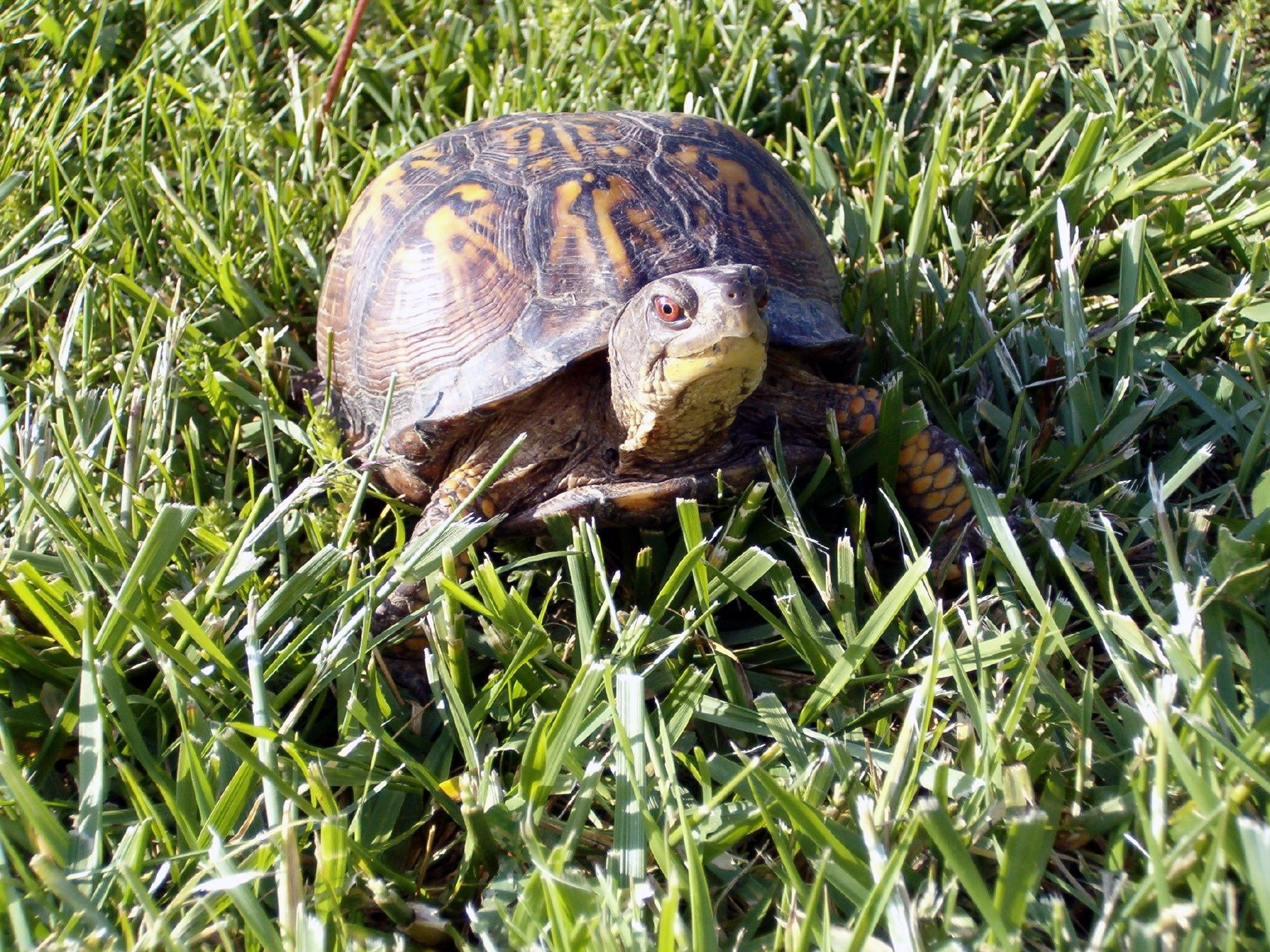 Reptile Facts: My Turtle Tale