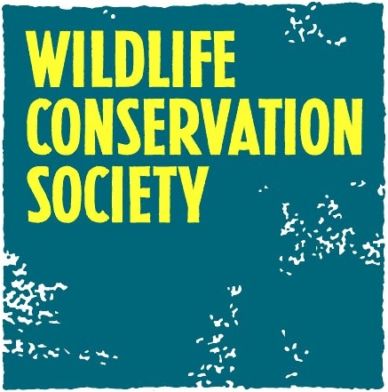information about wildlife conservation As a wildlife conservation volunteer with african impact, you will understand, first- hand, the importance of conservation within the context of the country you visit and monitor big cats and other wildlife whilst conducting important research that contributes to long-term park and animal management plans more information.