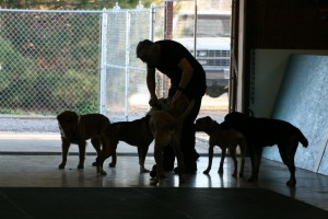 Dave playing with some of the dogs we have staying with us for daycare/boarding.