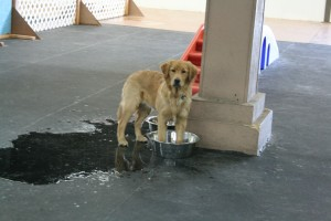 One of our daycare dogs, Lou. She loves to play in our water bowls.
