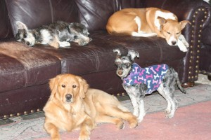 """A quick snapshot of a few of our """"space cadets"""" during nap time."""