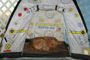 Sleepy cadet Jolene resting in one of our space pup tents.