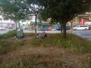 Median on the West Side Highway in New York City, where workers are searching for rats in their burrows. It was a struggle to find people to help save the abandoned rats. Posted October 2, 2015 by the West Side Highway Rats community on Facebook, used with permission.