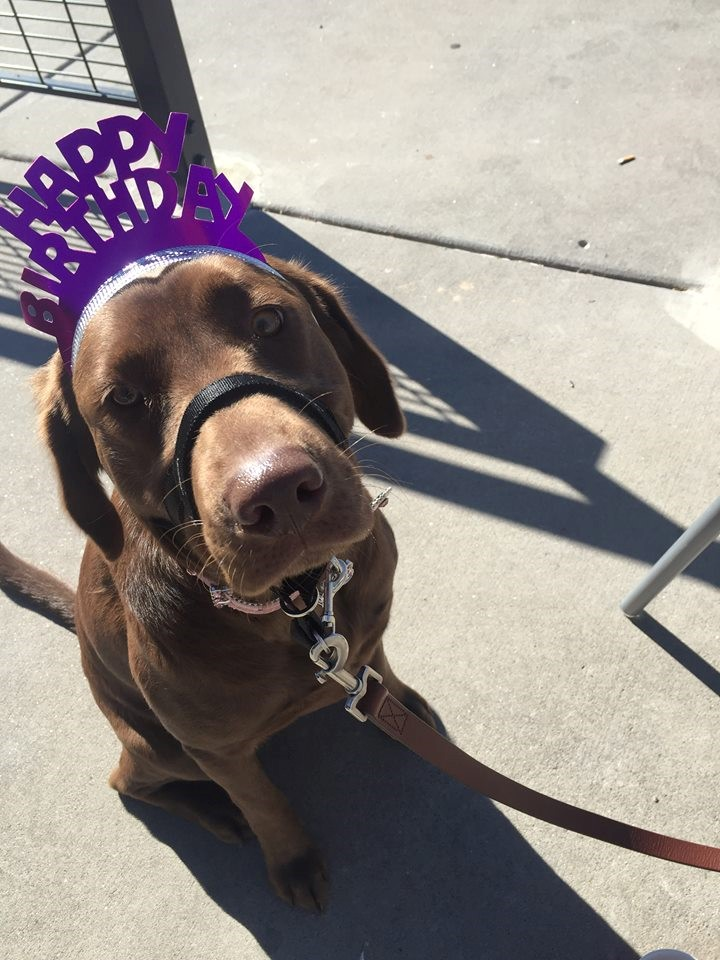 Aspen celebrating