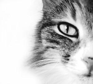 cat eye (300 x 271)