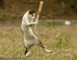 baseballcat