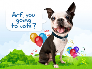 Voting-Dog