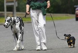 Dog Whisperer: Importance of Walking