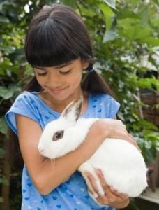 vet questions: rabbit