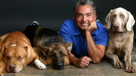 cesar millan how to train your dog