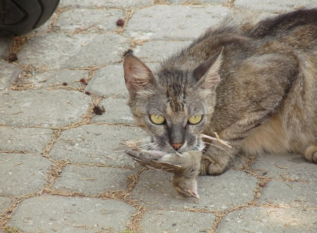 feral cat with bird