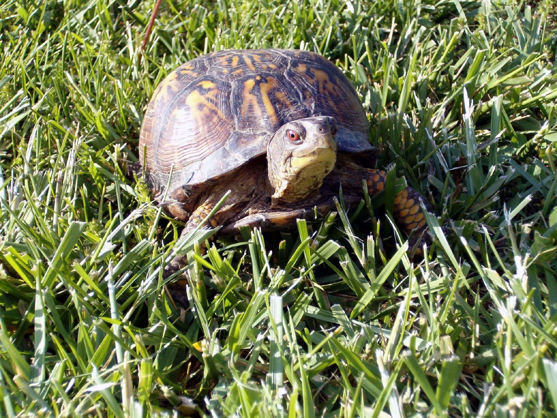 Turtle pics