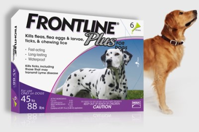 frontline (400 x 265)