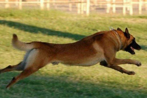 Ike, running