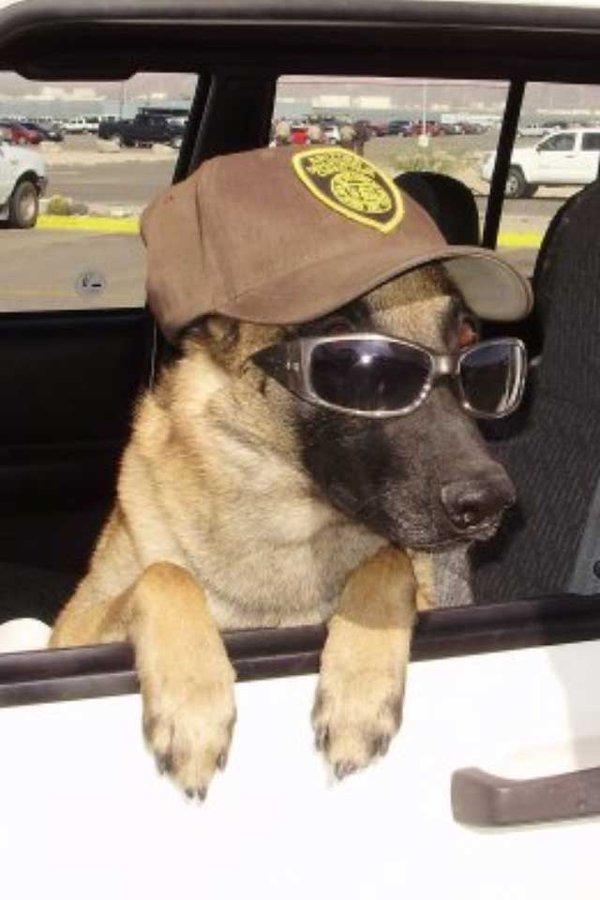 IKE-PRISON-DOG