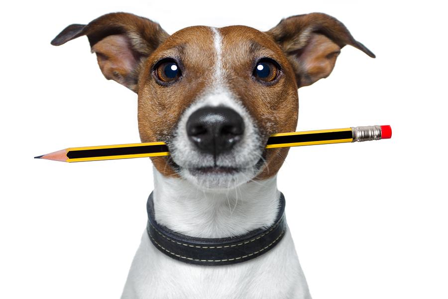 writer dog