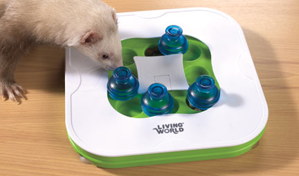 ferret with teach n treat