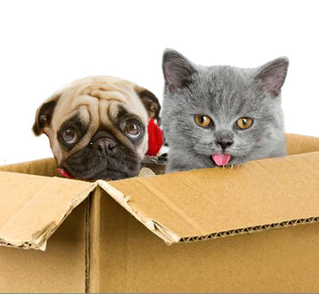 moving-cat-dog