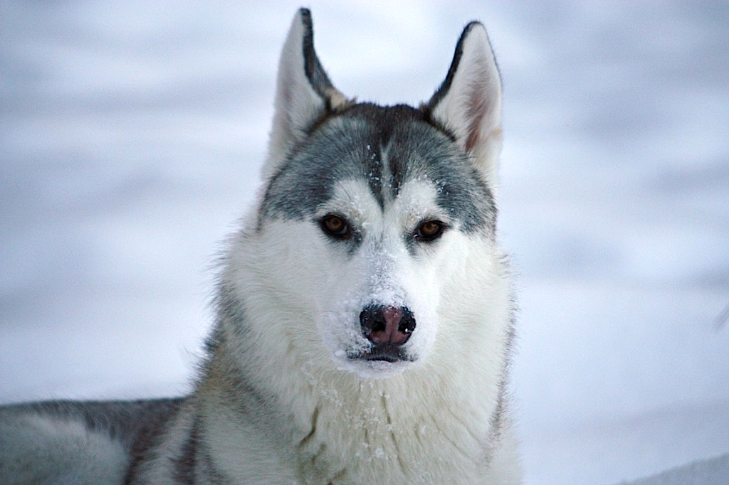 Term paper help: call of the wild and white fang by Jack london?