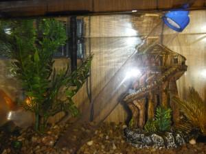 aquarium with vaccuum
