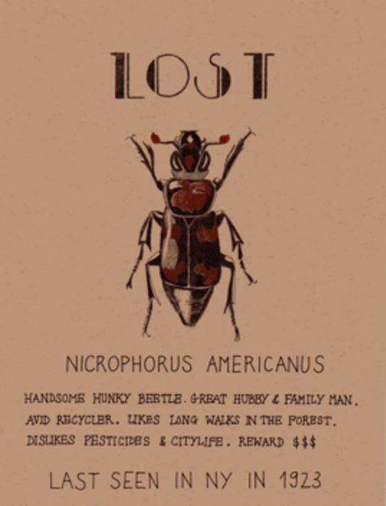 Lost beetle