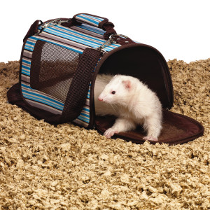 ferret in alt carrier