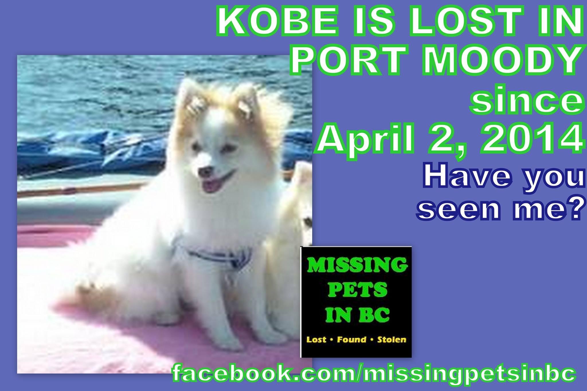 kobe is missing