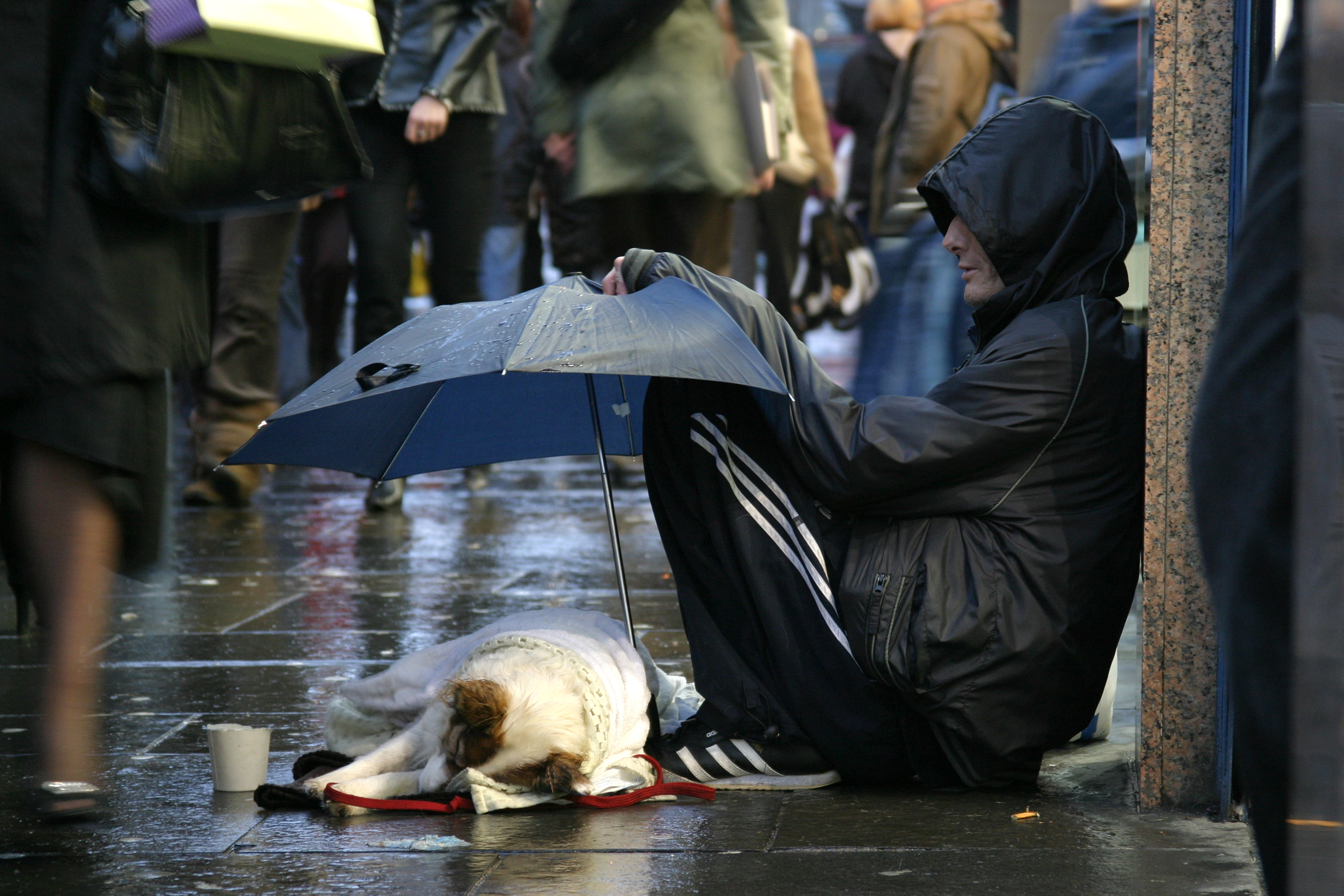 man holds umbrella over dog