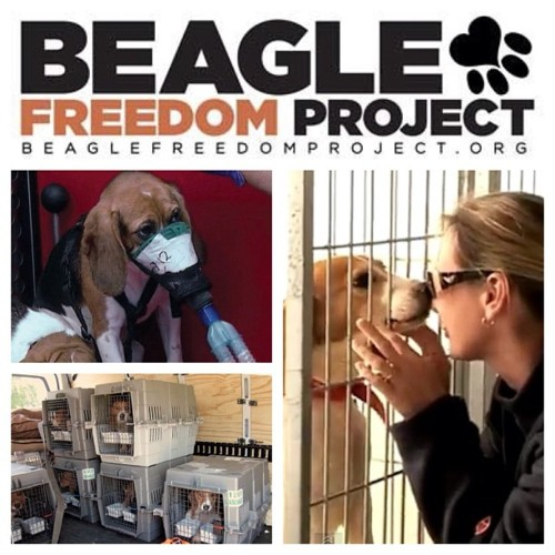 beagle freedom project logo