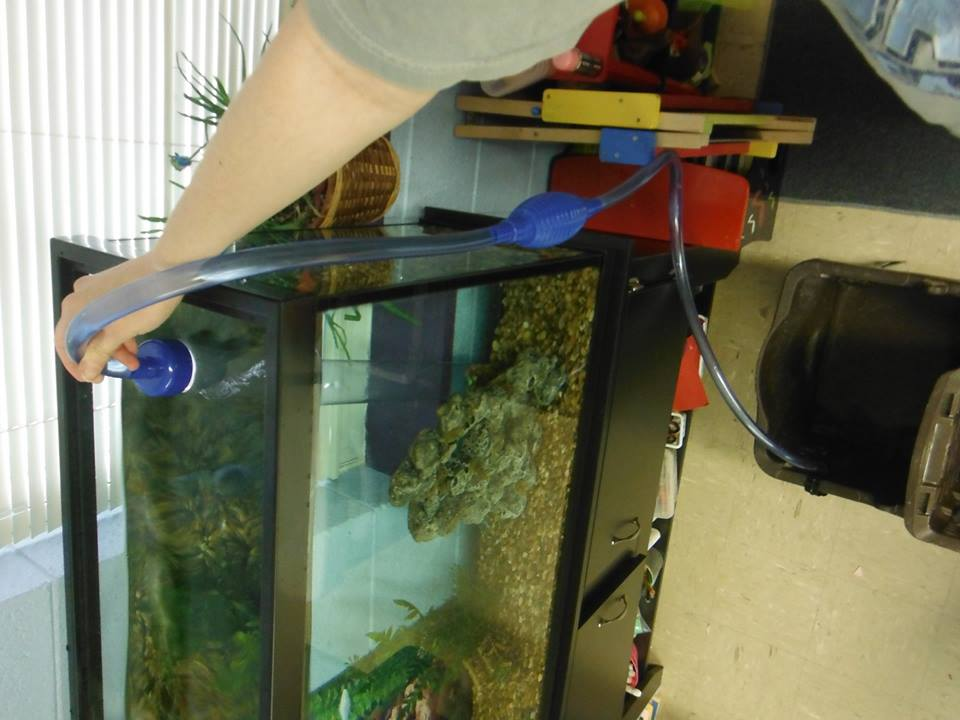 pumping out aquarium