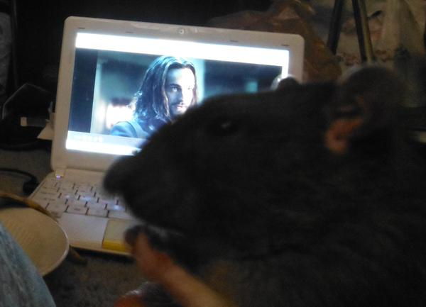 North watching sleepy hollow