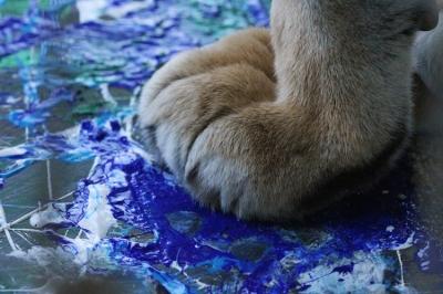 Kira's paw