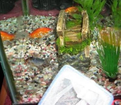 Travel fish tank