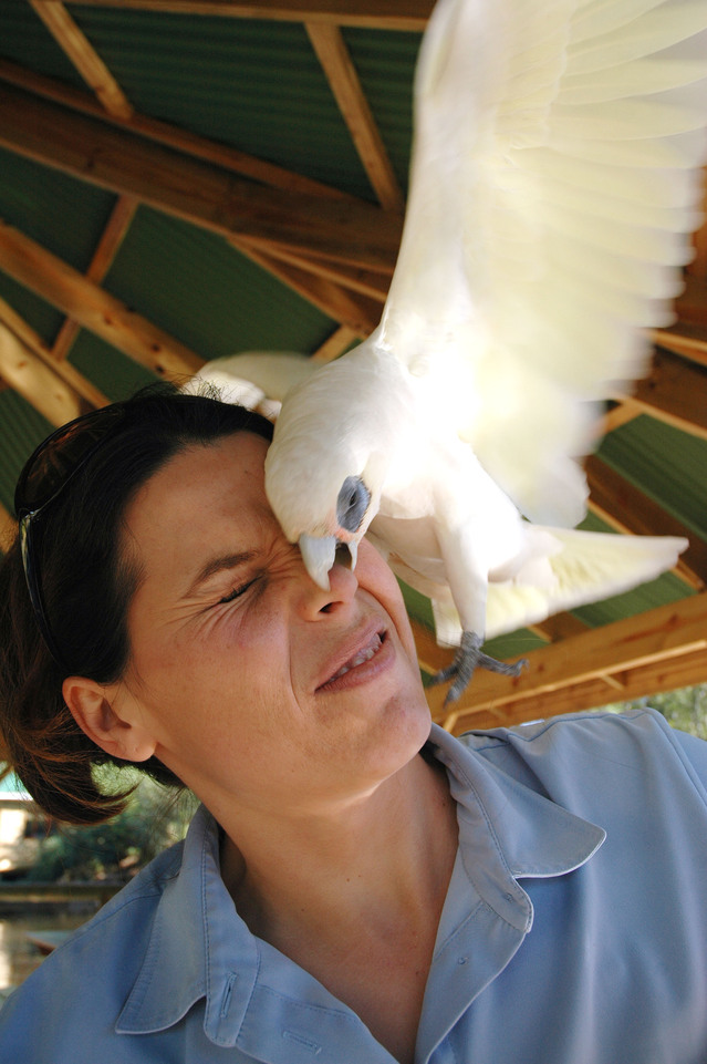 bird bite