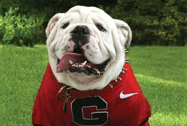 UGA VIII, University of Georgia Mascot. Photo tajen from Georgiaanddaughter.com