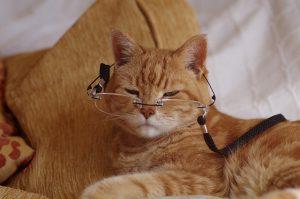 cat attract litter additive canada