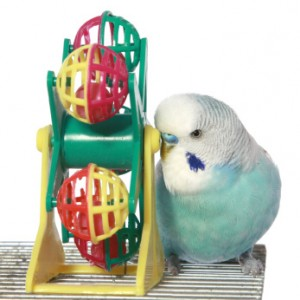 Budgie Buddies: The Tales of Budgerigar, the Common ...