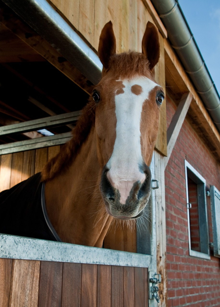 Bringing Your New Horse Home Tips For The First Time Owner