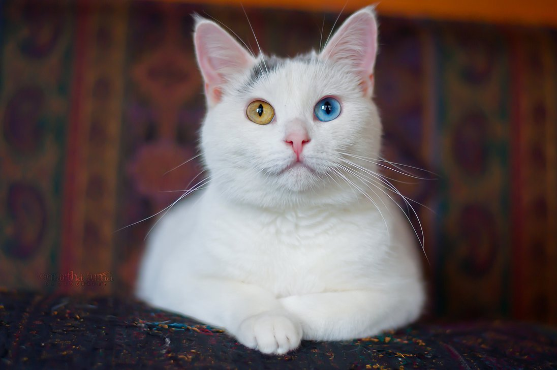 Caring For Your Deaf And Blind Cats